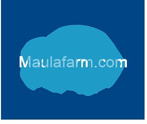 Bibit Ikan Murah - MAULA FARM